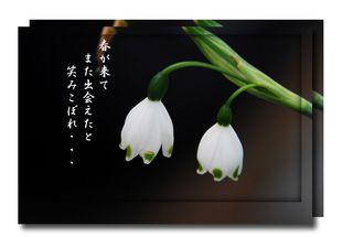 春 022のコピー