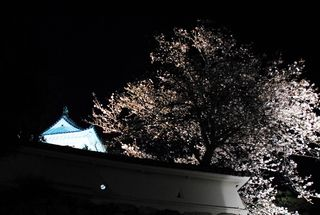 花回廊2010 150
