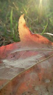 岡山は秋です!